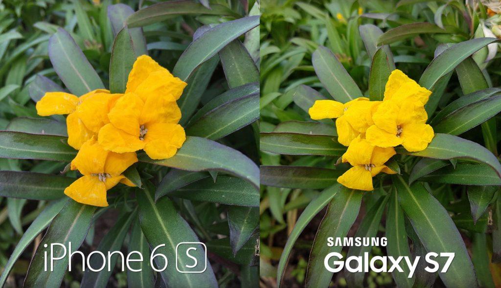 Пример работы камеры С7 в сравнении с айфоном